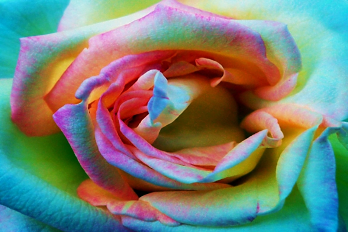 Abstract Photograph: 'Psychedelic Rose 1' by artist and photographer John Russell