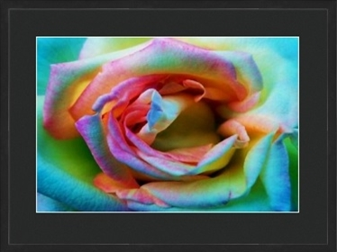 Psychedelic Rose 1