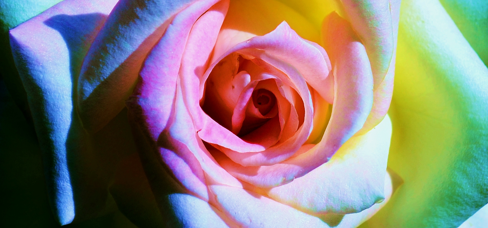 Abstract Photograph: 'The Hyperpsychedelic Rose' by artist and photographer John Russell