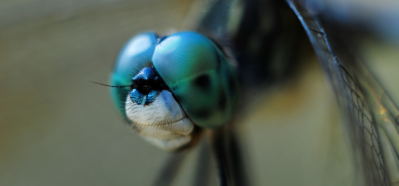 Macro Photograph: 'My most memorable Dragonfly' by artist and photographer John Russell